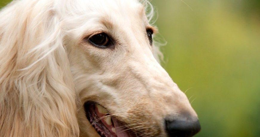 Домашние животные помогают людям справляться со стрессом