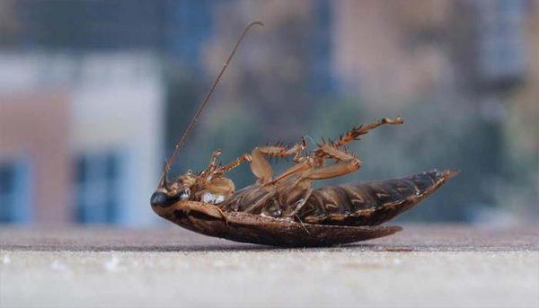 Средства от тараканов, проверенные временем: Дихлофос и мелок Машенька