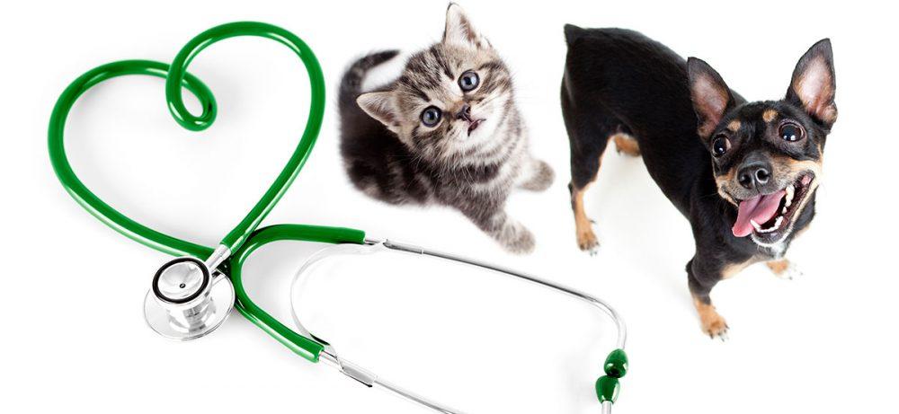Ветеринарная клиника ВетУют