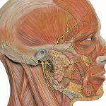 Паралич Белла – причины и симптомы