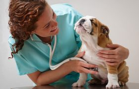 Какая ветеринарная клиника — хорошая?