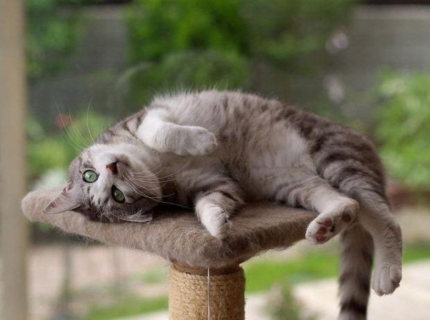 Действительно ли кошки снимают стресс: новое исследование ученых