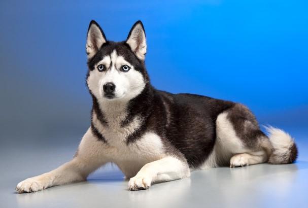 Учёные: Собаки способны переживать стресс хозяина