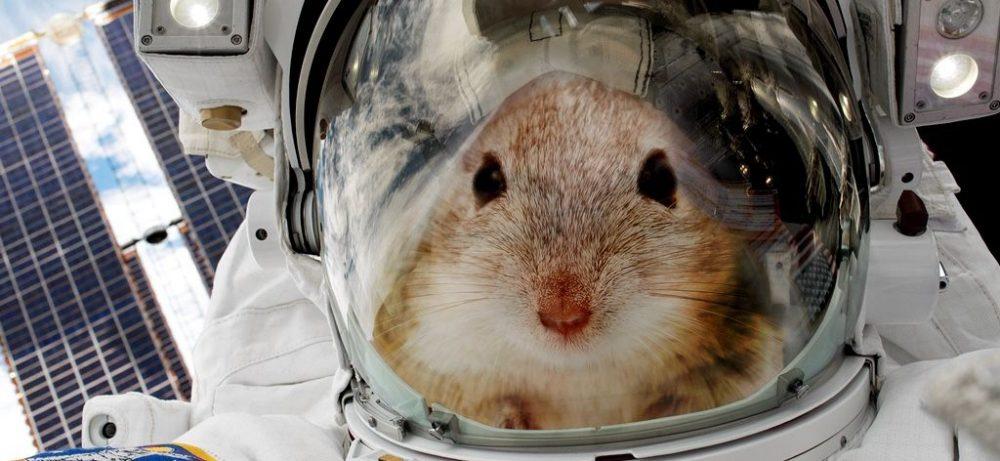 Показано разрушительное влияние космической радиации на кишечник
