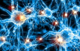 Учёным удалось обнаружить «микрофлору мозга»