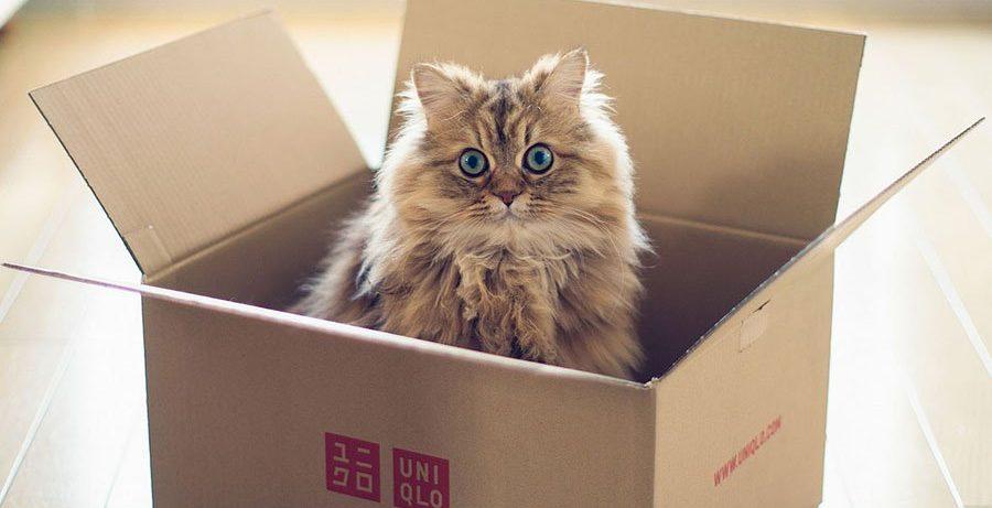 Ученые: кошки прячутся в коробках для снятия стресса