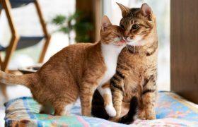 Как следить за здоровьем кошки?
