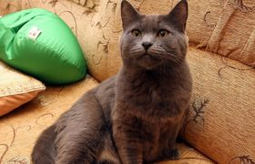 Владельцы кошек часто страдают шизофренией