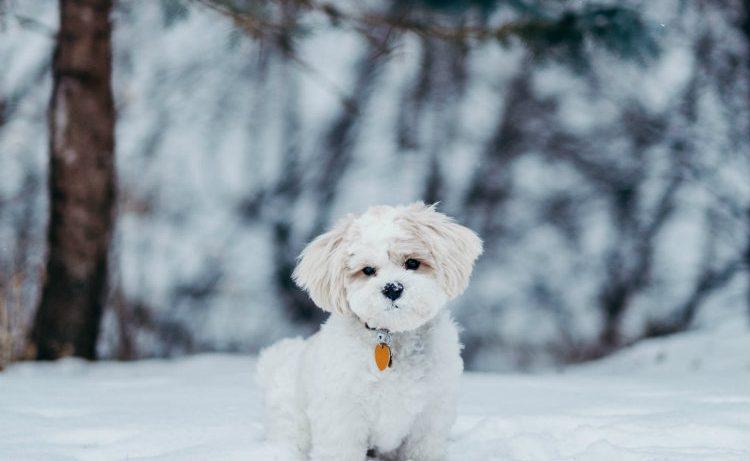 Миленькая агрессия: почему нам хочется «сжимать и не отпускать» котят и щеночков