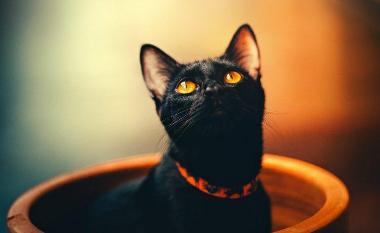 Черная кошка в разбитом зеркале: почему суеверия до сих пор существуют