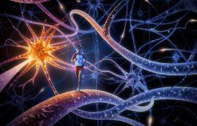 Мифы о нервной системе