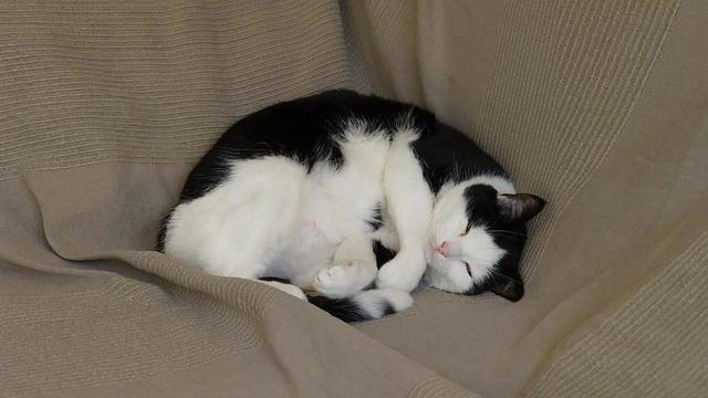 Вредно ли спать на левом боку?