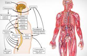 Как стресс влияет на здоровье всего организма?