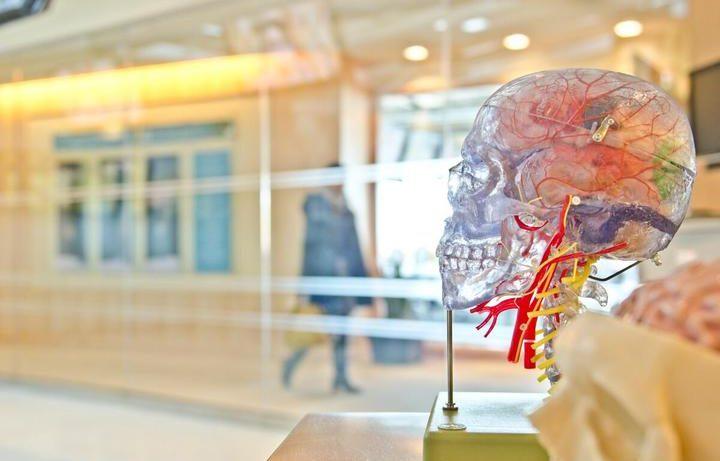 Бей, беги или болей: как стресс влияет на иммунную систему